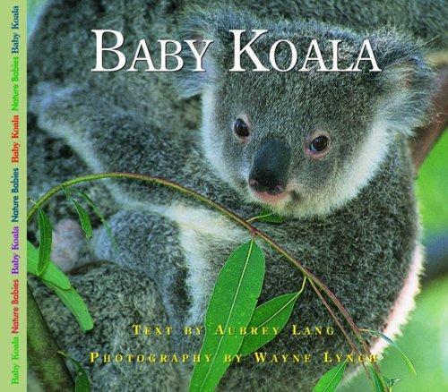 Baby Koala (Nature Babies)