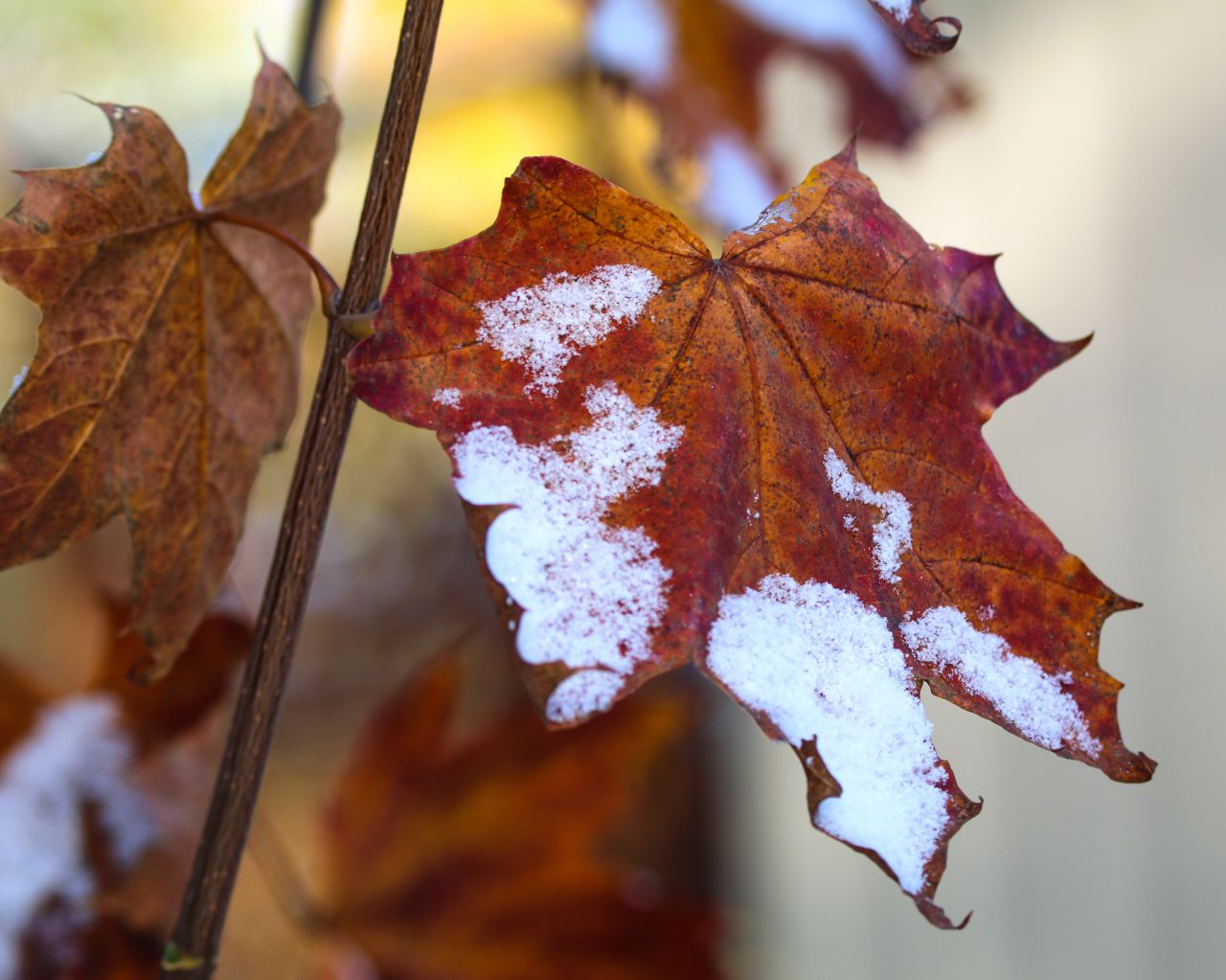 Changing seasons in the Finger Lakes (photo)